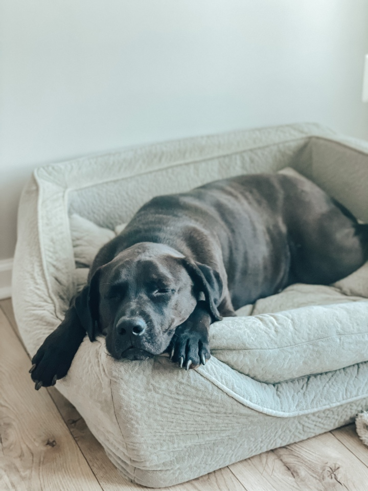 How to Minimize Dog Odor in YourHome